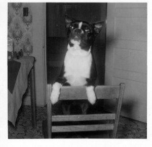 Mickey, the finest dog who ever owned me.